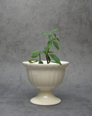63-bloempot-Zenith-1693-room-wit