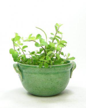 174-bloempotje-met-handvatten-groen
