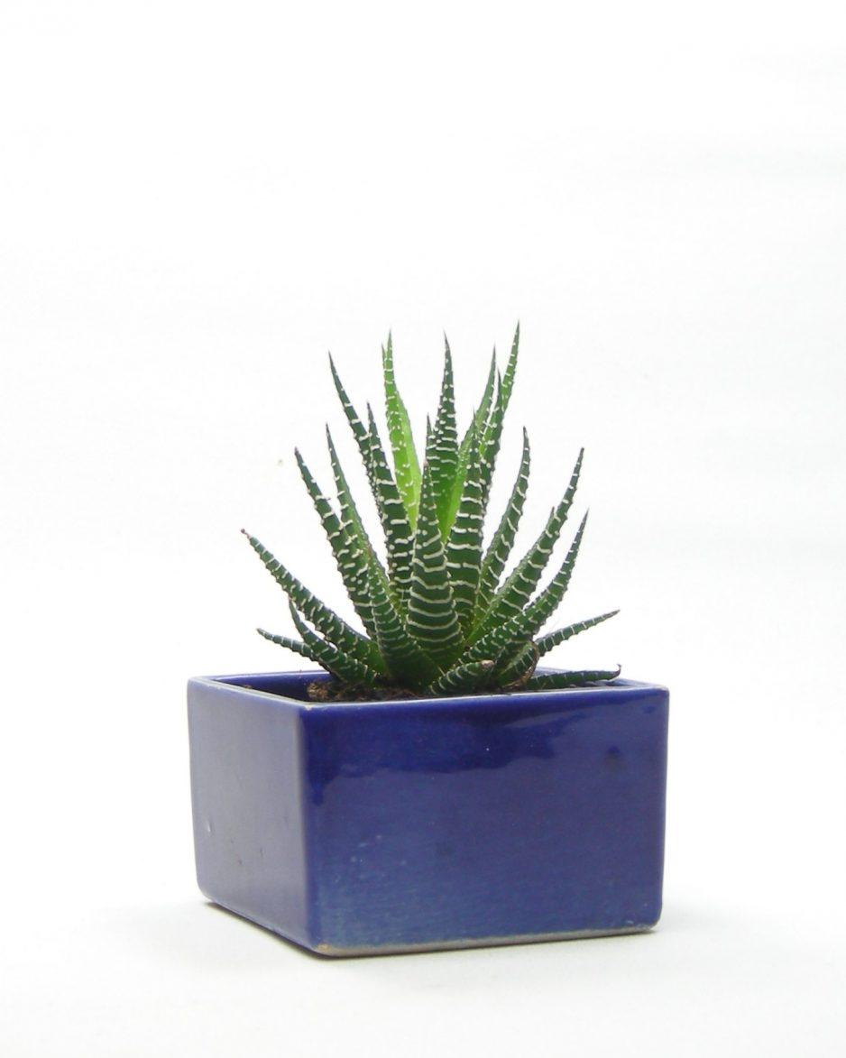571 - bloempotje vierkant blauw
