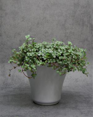 76-bloempot-taps-oplopend-grijs