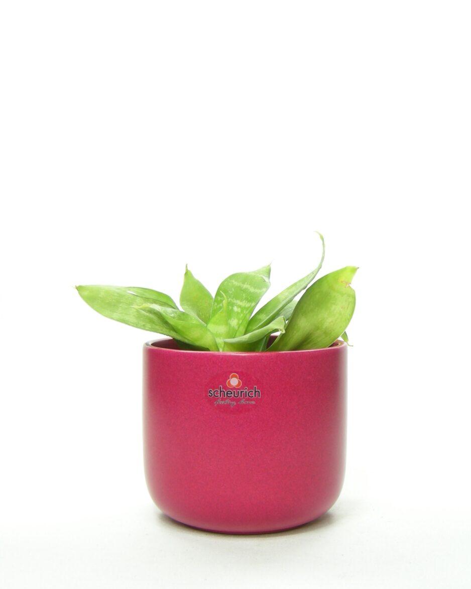 681 - bloempot Scheurich 936-12 roze