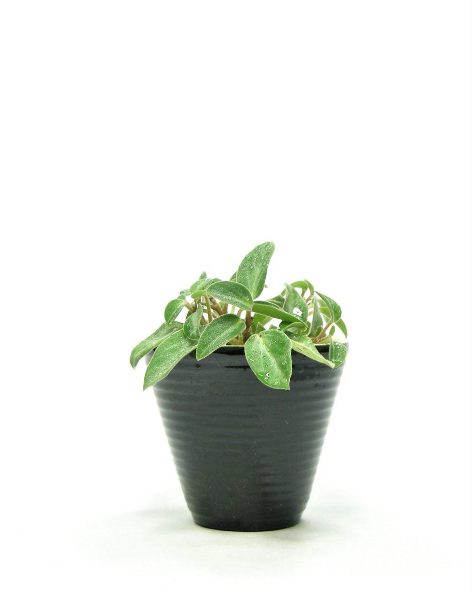 811 - bloempotje op stokjes gebakken zwart
