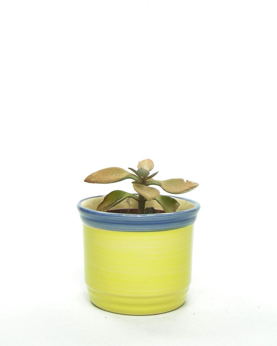 1050 - bloempot met gekleurde rand geel - blauw