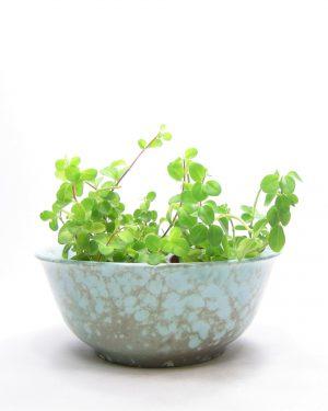 1154 - schaal - bloempot op stokjes gebakken groen