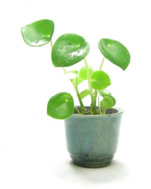 1378 - Bloempotje op stokjes gebakken groen